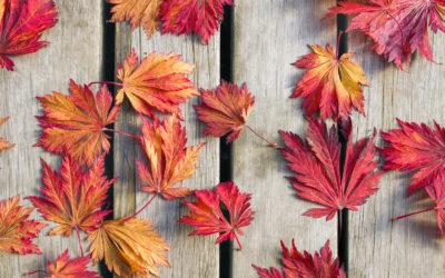 Jesienią dbamy o odporność